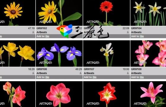 24个花朵开花 发芽 花草生长过程高清实拍视频素材 Mov
