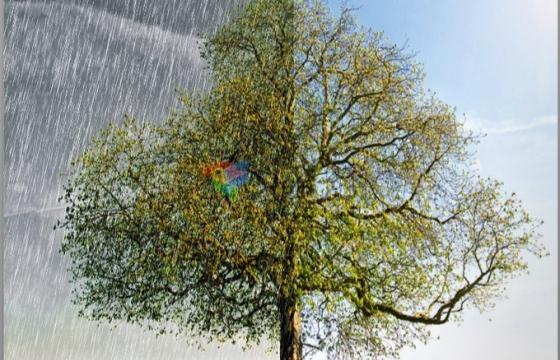 PS Lr插件滤镜 照片自然天气模拟插件 Franzis NATURE projects v1.18