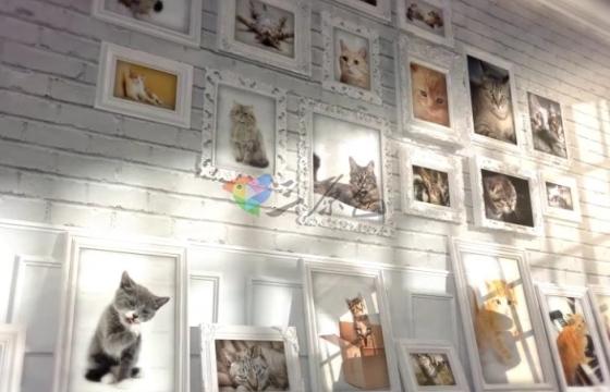 AE模板 宠物小猫阁楼照片墙相册模板 Videohive Kitten Loft