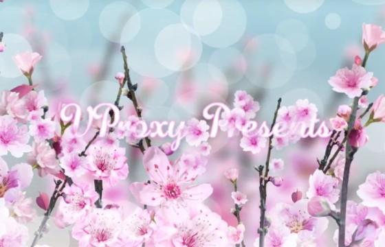 AE模板 春天里的花朵 唯美标题照片相册展示 Spring Blossom