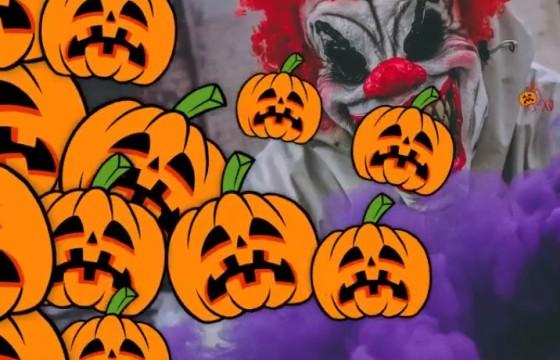 AE Pr Mogrt模板-南瓜图形动画转场过渡切换 Pumpkin Transitions