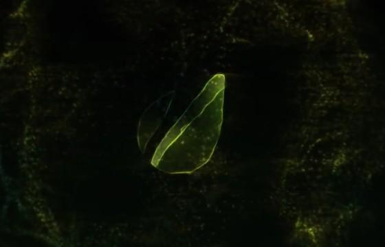 AE模板 触发粒子冲击波LOGO文字显示 Trigger Particle Reveal