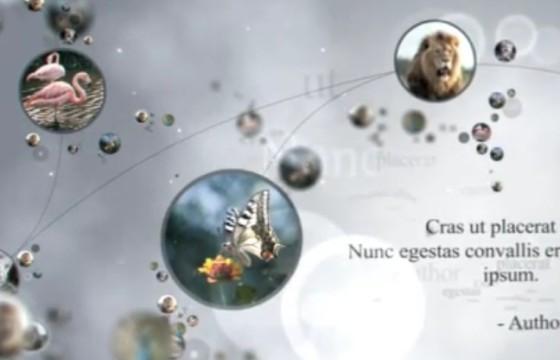 AE模板 人物关系动态链接显示说明 VideoHive Connections