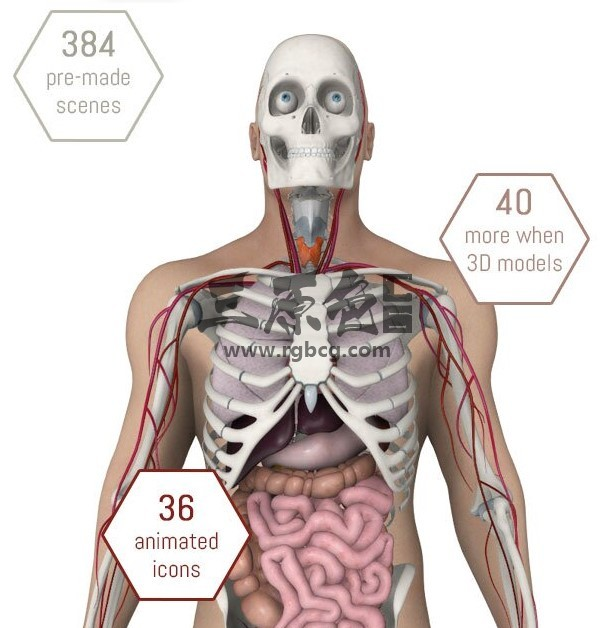 E3D模型 人体解剖 生物医疗器械模型 Human Body Anatomy VIP 资源-第1张
