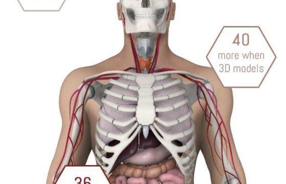 E3D模型 人体解剖 生物医疗器械模型 Human Body Anatomy