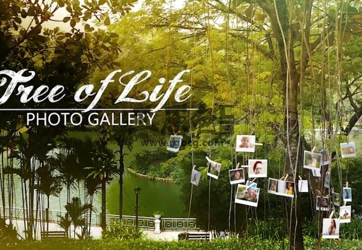AE模板 实拍视频场景相片合成效果 Tree of Life Photo Gallery Ae 模板-第1张