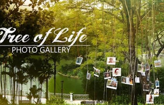 AE模板 实拍视频场景相片合成效果 Tree of Life Photo Gallery